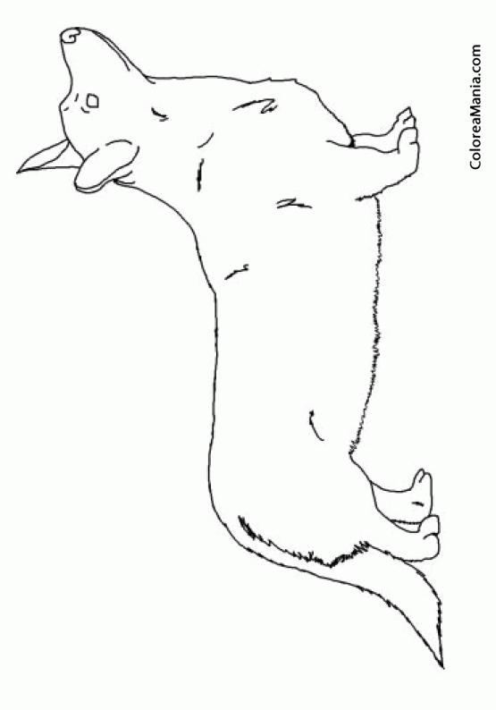 Colorear Perro Corgi Galés de Pembroke 4 (Animales Domésticos ...