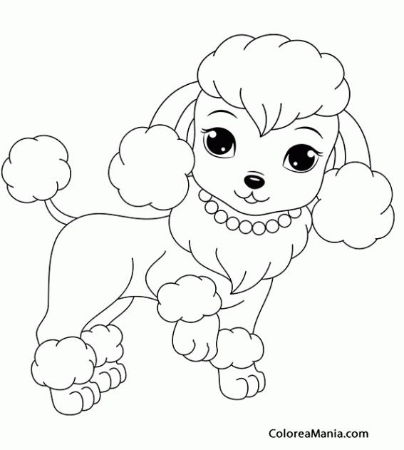 Colorear Perrita Caniche Animales Domésticos Dibujo Para Colorear
