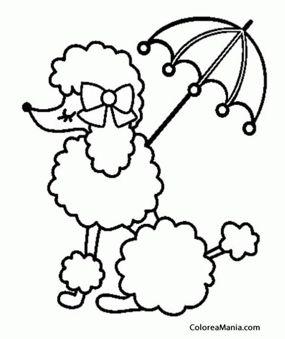 Colorear Perrita caniche con paraguas Animales Domsticos