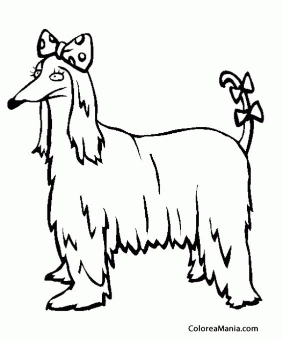 Colorear Perro Afgano Con Tres Lazos Animales Domésticos Dibujo