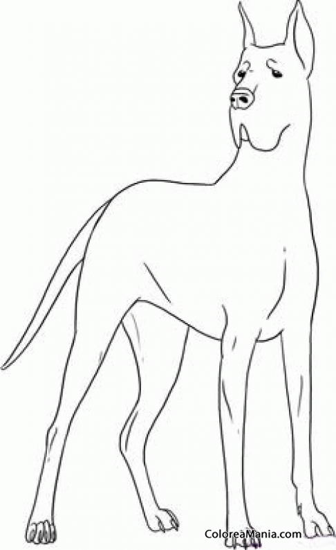 Colorear Perros Alano, Dogo o Gran Danés 4 (Animales Domésticos ...