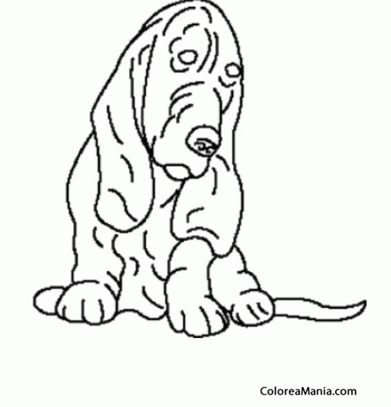 Colorear Perro Basset Hound Sentado Animales Domésticos Dibujo