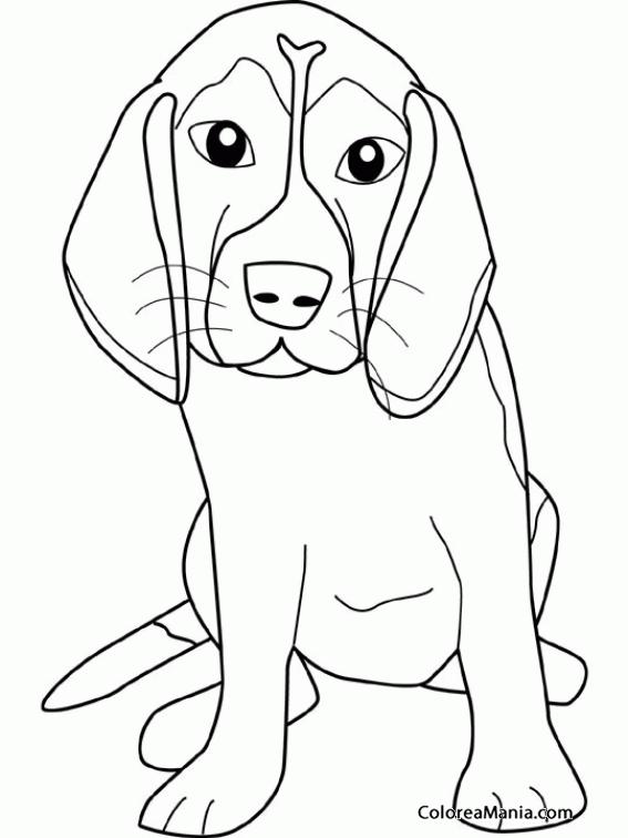 Colorear Perro Cachorro De Basset Hound Animales Domésticos