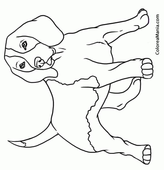 Dibujo Para Colorear Perro. Top Dibujo De Perro Para Colorear. Great ...