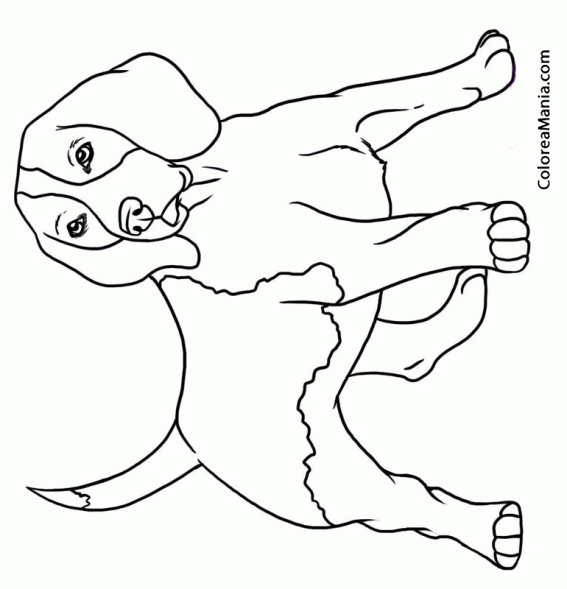 Affordable Minion Birthday Party Ideas in addition Serpiente Cobra De Cabeza Grande in addition Macaco as well Hora De Aventura Desenhos Para Imprimir Colorir E Pintar likewise Perro Beagle Posado De Pie 2. on easy to draw minions