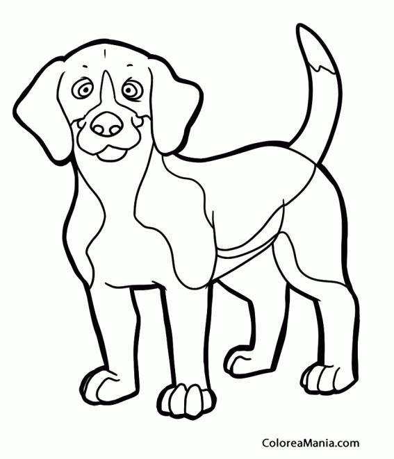Perros Beagle Gratis. Beagle Limon Cachorros Gratis Criadero. Free ...