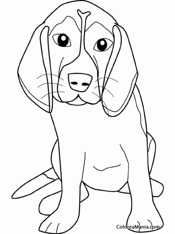 Excepcional Beagle Para Colorear Viñeta - Ideas Para Colorear ...