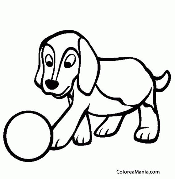 Colorear Cachorro Perro Beagle Jugando Con Pelota Animales