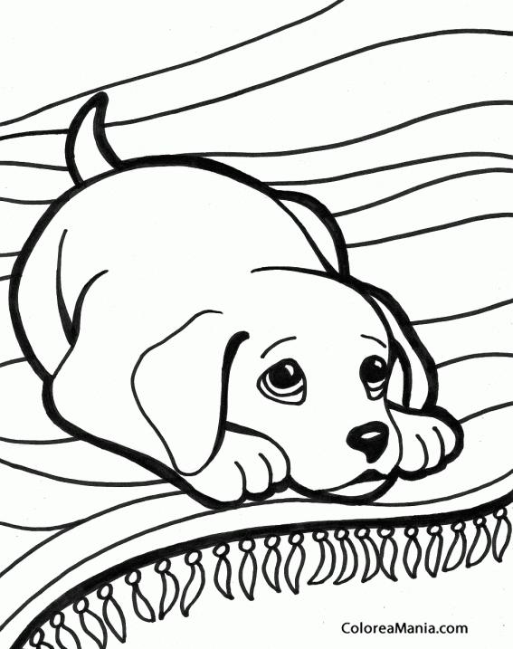 Colorear Cachorro de Beagle tumbado en alfombra (Animales Domésticos ...
