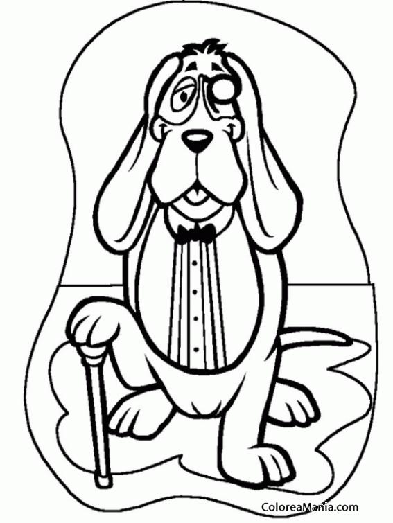 Colorear Perro Bloodhound Abuelito Animales Domésticos