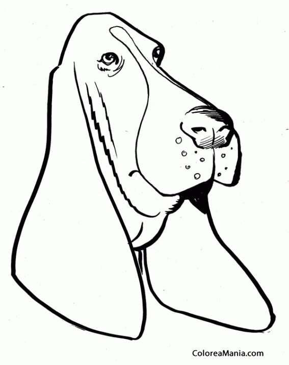 Colorear Cabeza Perro Bloodhound (Animales Domésticos), dibujo para ...