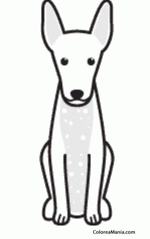 Colorear Silueta Perro Xoloitzcuintle o Xolo (Animales ...