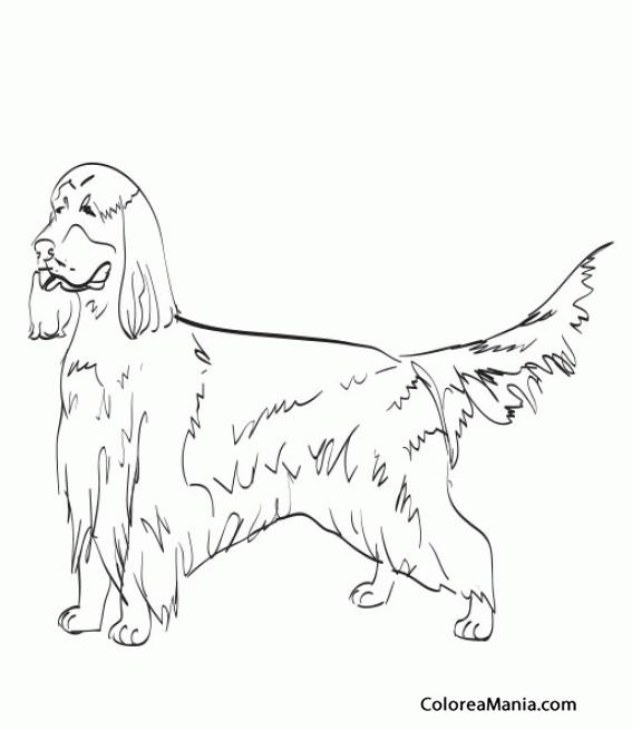 Único Irlandés Para Colorear Imprimible Regalo - Dibujos de Animales ...