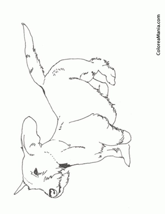 Colorear Perro Teckel de pelo duro (Animales Domésticos), dibujo ...