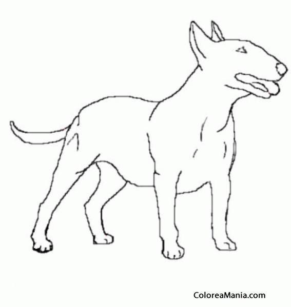 Colorear Perro Bull Terrier de medio lado Animales Domsticos