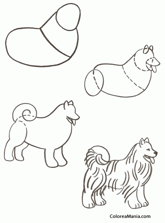 Colorear Dibujar un Husky (Cómo dibujar animales), dibujo para ...