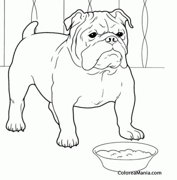 Colorear Perro Bulldog Ante Su Plato De Comida Animales