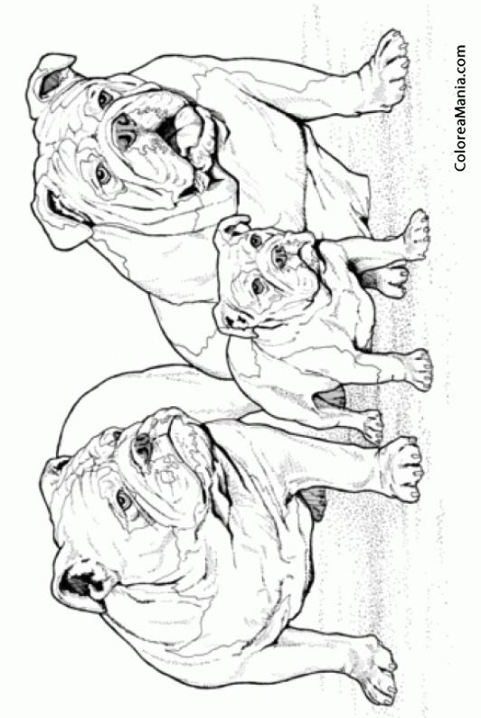 Colorear Perros Bulldog Inglés En Familia Animales Domésticos