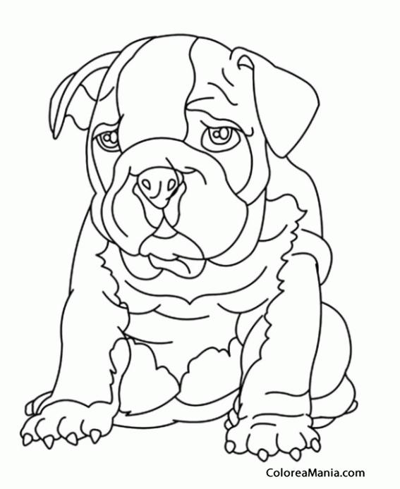 Único Colorear Bulldog Americano Molde - Páginas Para Colorear ...