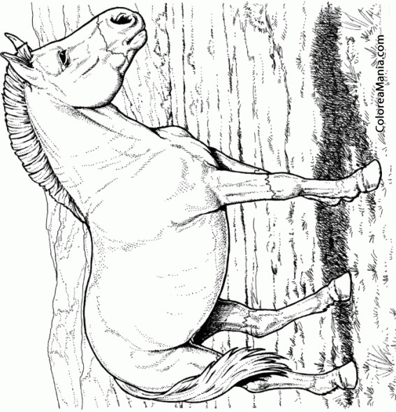 Colorear Caballo salvaje de Przewalski (Animales Domésticos), dibujo ...