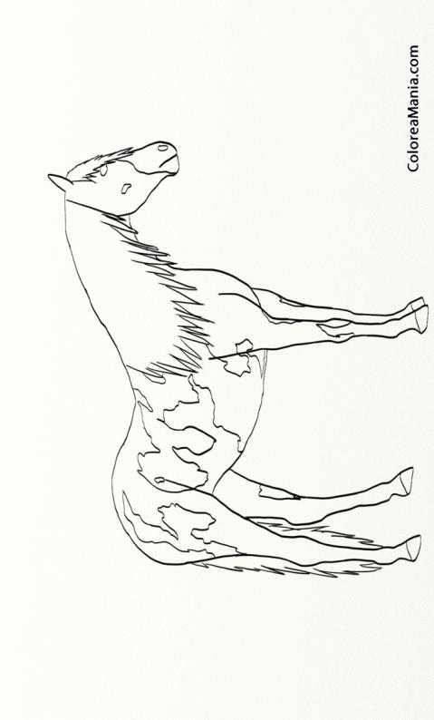 Colorear Caballo Pinto De Perfil Animales Domésticos Dibujo Para