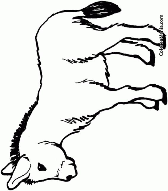 83 Dibujo De Burro Para Colorear Dibujos Infantiles De  : 9279burro joven from motocyclenews.top size 567 x 646 png 66kB