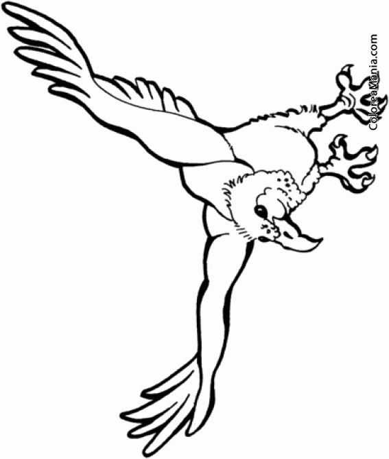 Colorear Buitre En Vuelo Descenso Aves Dibujo Para