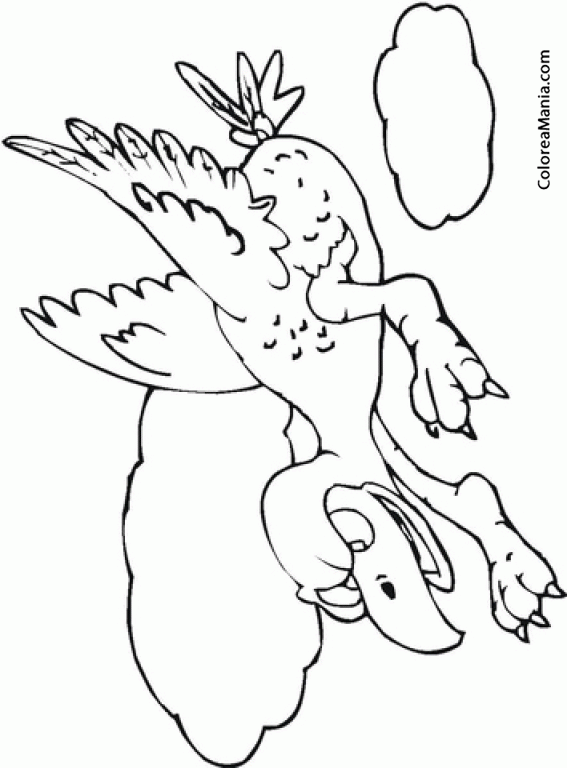 Colorear Zopilote Pelón Al Ataque Aves Dibujo Para Colorear Gratis