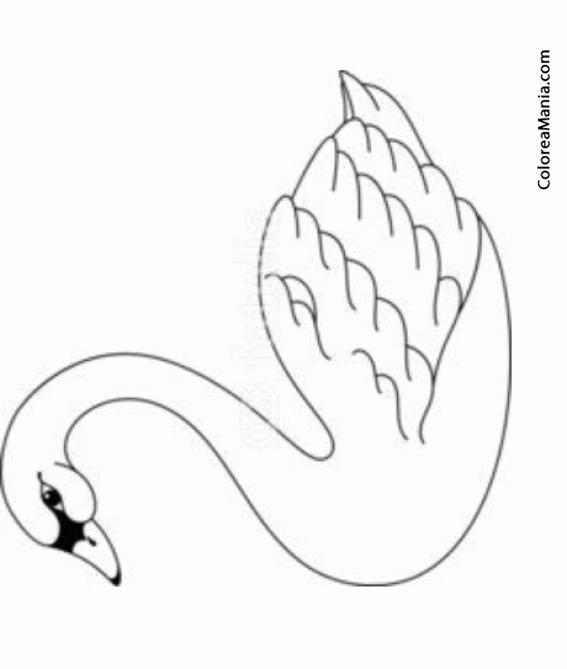 Colorear Bello Cisne (Aves), dibujo para colorear gratis