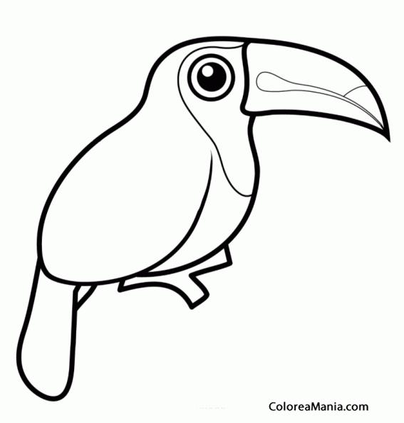 Colorear Tucán Toucan Tucano Aves Dibujo Para Colorear