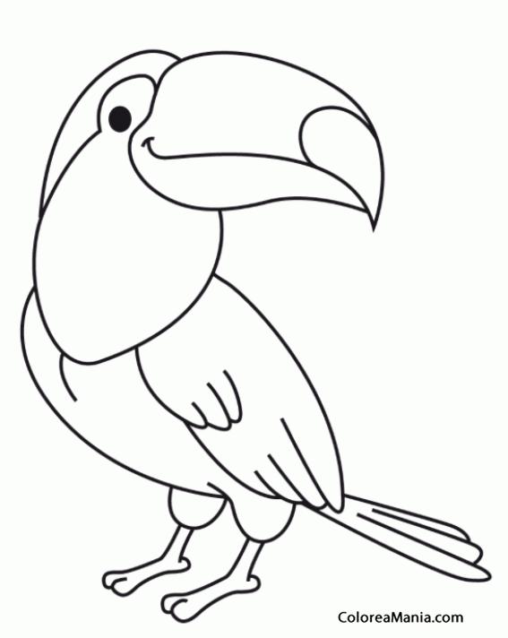 Colorear Tucán De Cómic Aves Dibujo Para Colorear Gratis