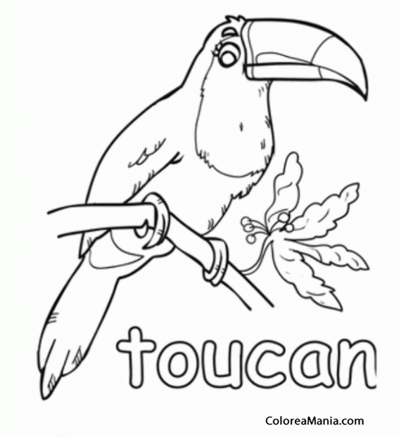 Colorear Tucán Toucan Tucano 2 Aves Dibujo Para