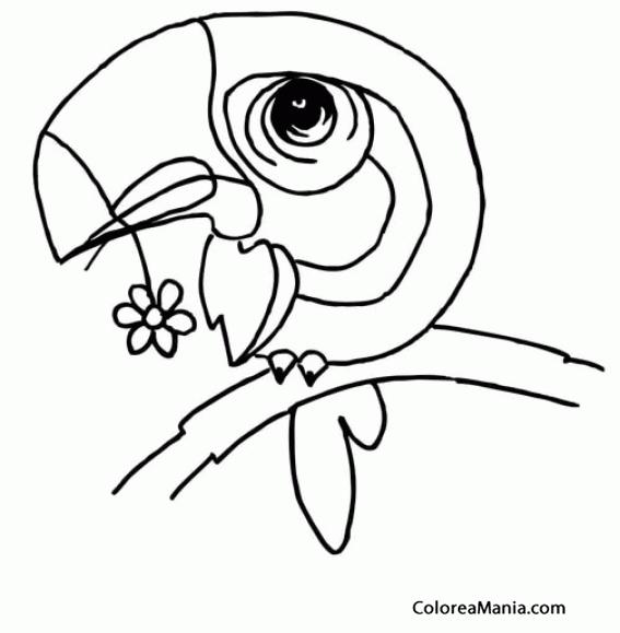 Colorear Tucán Todo Cabeza Aves Dibujo Para Colorear Gratis