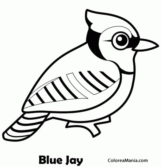 Colorear Arrendajo Azul, Urraca azul (Aves), dibujo para colorear ...