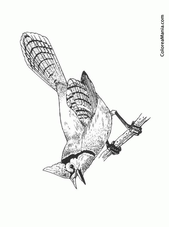 Encantador Aves Realistas Para Colorear Motivo - Ideas Para Colorear ...