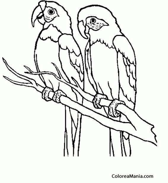 Colorear Dos Loros En Una Rama Aves Dibujo Para Colorear