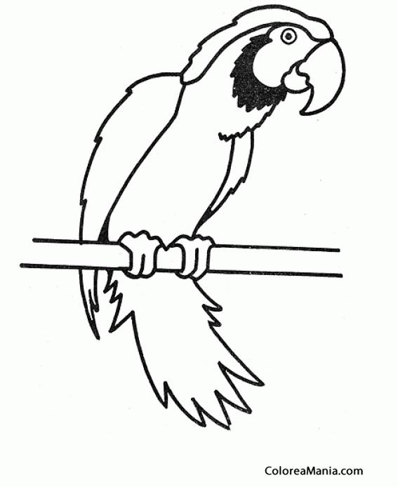 Colorear Loro Barbudo Aves Dibujo Para Colorear Gratis