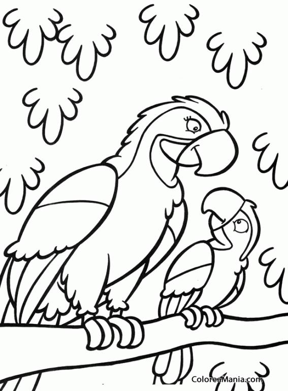 Colorear Mamá Loro Y Su Cría Aves Dibujo Para Colorear Gratis