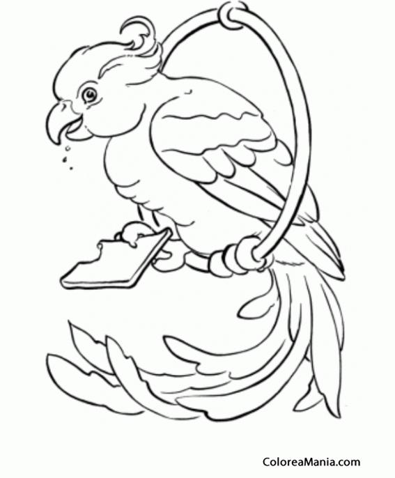 Colorear Cacatúa En Percha Circular Aves Dibujo Para