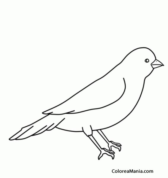 Colorear Silueta de Canario (Aves), dibujo para colorear gratis