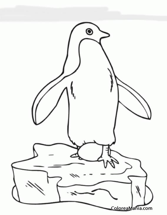 Dibujo De Pingüino Para Colorear » Colorear Dibujos