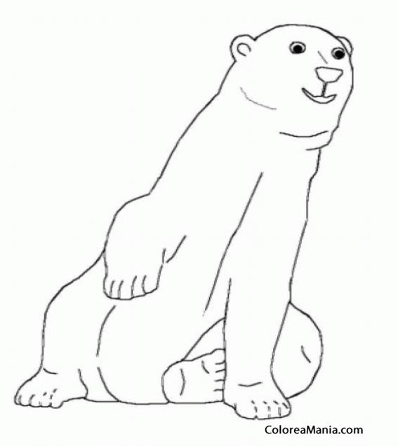 Colorear Oso Polar Sentado De Frente Animales Polares Dibujo Para