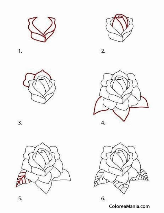 Colorear Dibujar Una Rosa Sin Tallo Cómo Dibujar Flores Y árboles