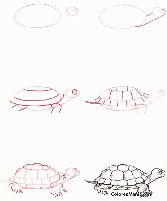 Colorear Dibujar Tortuga De Tierra Cómo Dibujar Pequeños Animales