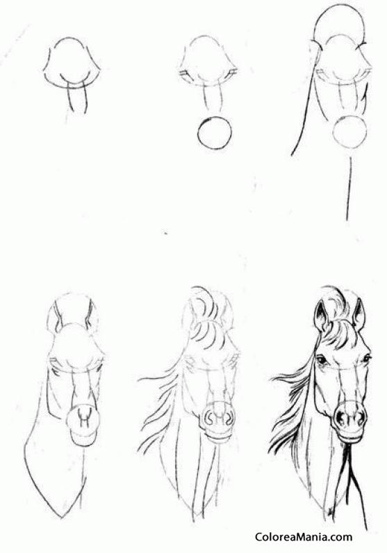 Colorear Cabeza de caballo de frente (Como dibujar un caballo ...