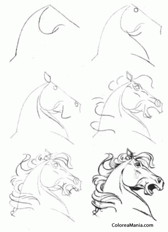 Colorear Dibujar cabeza caballo furioso (Como dibujar un caballo ...