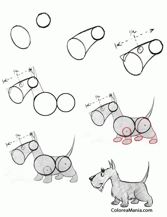 Colorear Dibujar Un Schnauzer Mini Como Dibujar Un Perro Dibujo