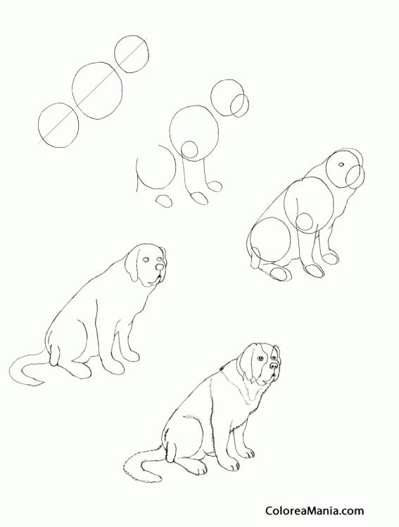 Colorear Como dibujar un San Bernardo (Como dibujar un perro ...