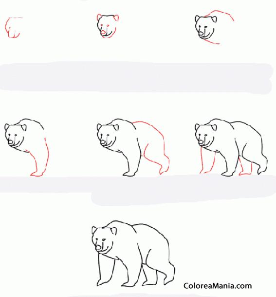 Colorear Dibujar Un Oso Pardo Como Dibujar Un Oso Dibujo Para