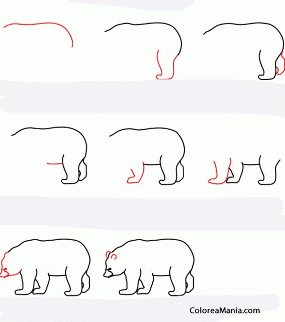 Colorear Como dibujar un oso negro (Como dibujar un oso), dibujo ...
